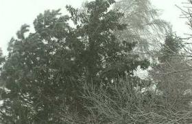 Зимно Княжево